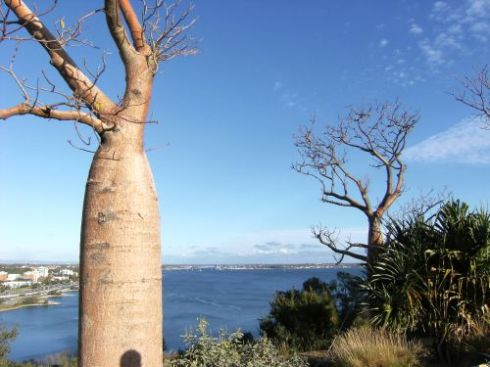 Boab tree and Perth view